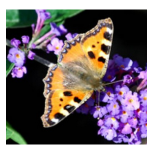 13-papilon-logo
